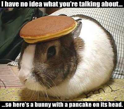 Here's a rabbit with a flapjack on its head